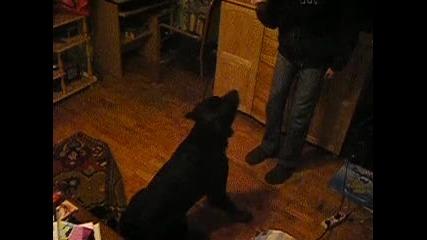 Rottweiler se pravi na umrql