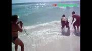 Акула на плажа