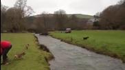 Куче прескача цяла река