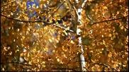Е С Е Н -наслади се на шума на есенните листа
