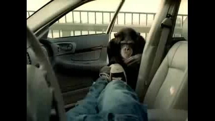 Маймуната Пазач