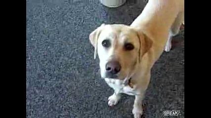 Най - послушното куче което сте виждали :d