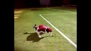 К.роналдо симулация Fifa 08