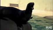 Смешни крещящи животни - Компилация