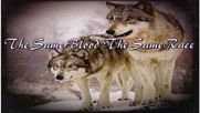 Triskel - Lobo blanca