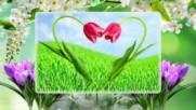 Пролетна хармония ( релакс)