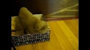 Котка реди заклинания 100% Смях !!!