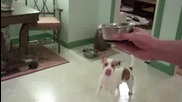 Doggy Dance Fail