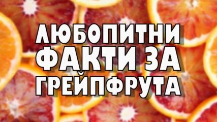 Любопитни факти за грейфрута