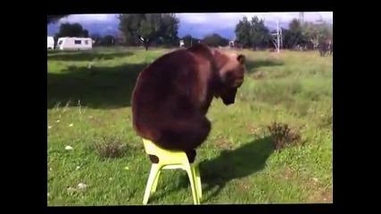 Тази мечка ще ви изуми!