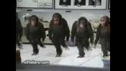 majmunskokolo - by corradofen