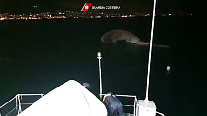 Italy: Coast guard patrol boat tows whale carcass to Naples after discovery near Sorrento