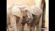 Какво прави този слон ?