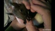 Миши чисти стопанина си