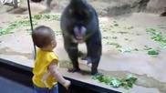 Павиан се дупи на дете !