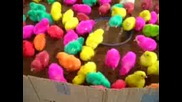 Цветни Пиленца