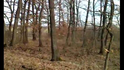 Две сърни в гората