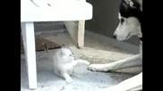 Хъски и Котенце