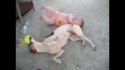 Bebe Xape Ku4e