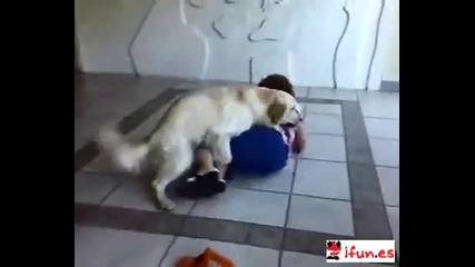 100% Смях Разгонено куче се качва на първата която среща : D