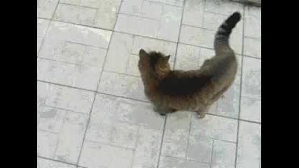 Много Смях - Котка срещу Куче
