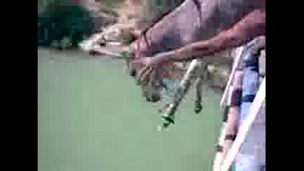 смях циганите хвърлят магаре на гюла