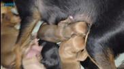 Кучето ми роди 6 бебета :)