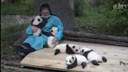 Мечтана работа - Да гушкаш малки панди!