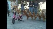 (смях) Куче кара колело с приятели !