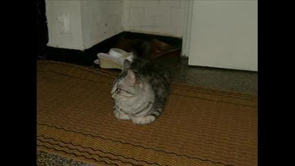 Котката ми :)