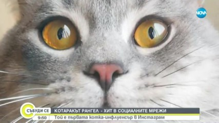 Коя е първата котка-инфлуенсър в Instagram?