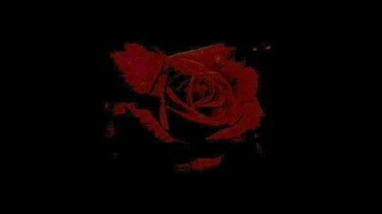 Edguy - Scarlet Rose