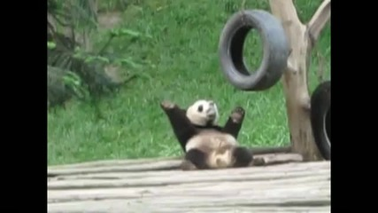 Танцуваща панда