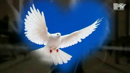Scorpions - White dove (превод)