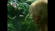 H2o - Бягството На Елиат 1 Част(на Българс
