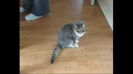 Пияна Котка (много Смях)