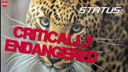 Топ 5 на най-застрашените животни