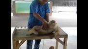 Маймунката си прави тренировка