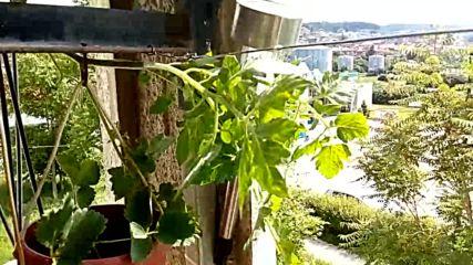 Малката ни цветна - плодова градинка на терасата ни