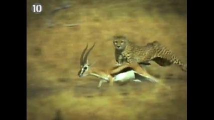 Топ 10 -най- бързите животни на Земята