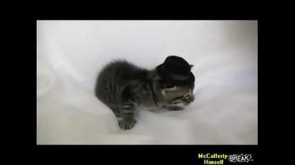 Котка удря малко коте Cat Slaps Kitten s Hat Off
