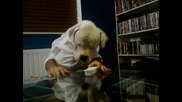 Куче се храни като човек !