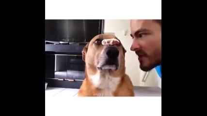 Куче с дисциплина на самурай !