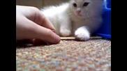 Мъничко Бяло Котенце