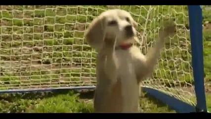 9-годишния бийгъл Пурин подобри световния рекорд за най-много топки, хванати от куче за минута