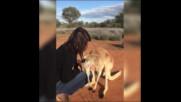 ИСТИНСКА ЛЮБОВ: Кенгуру прегръща гледачите си всяка сутрин