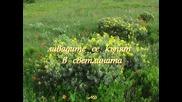 Цветница / Mozart - Flute Quartet K.298 Rondo