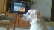 Нори обича анимация... :)