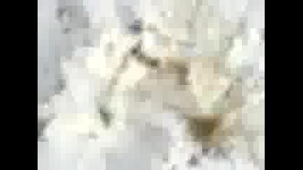 gogo katericata se opitva kara