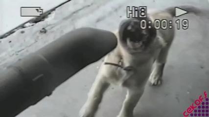Кучето и прахосмукачката... :)
